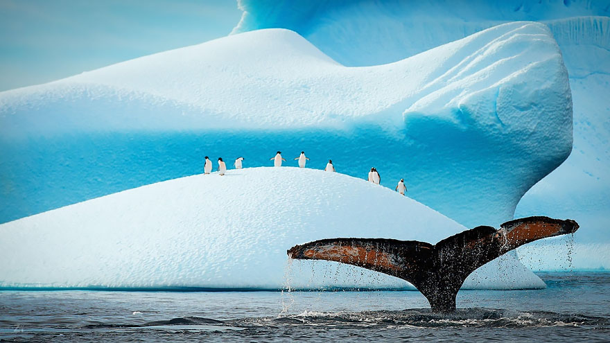whale__880