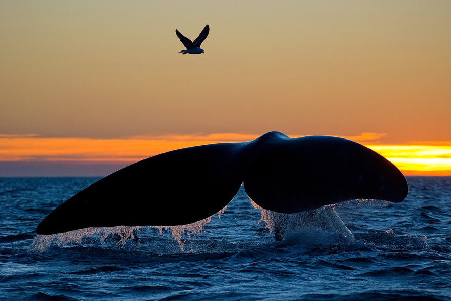 world-whale-day-photos-171__880