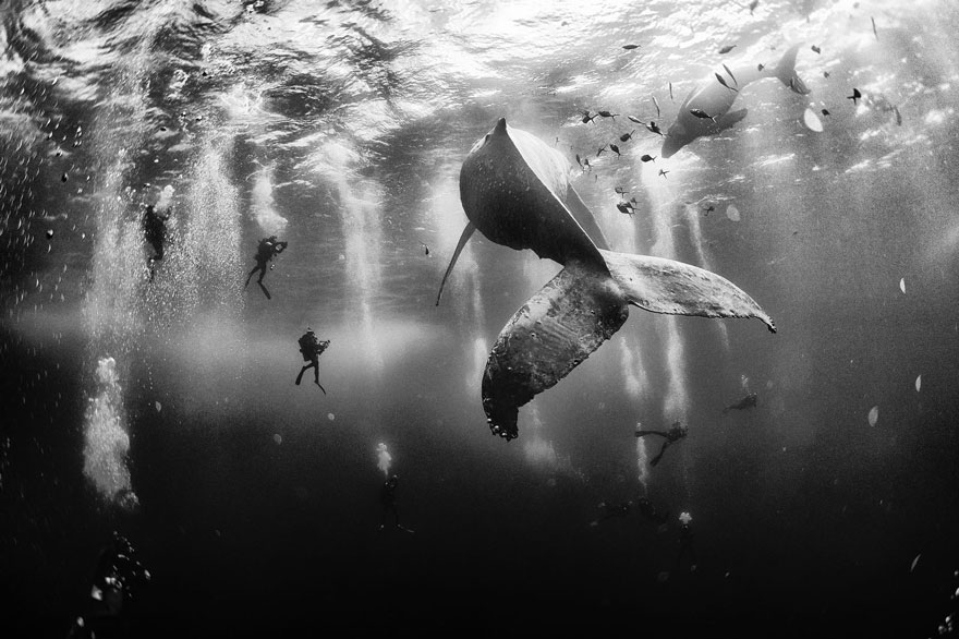 world-whale-day-photos-21__880