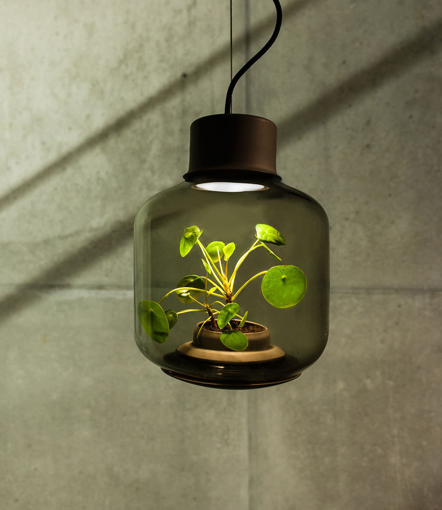 We-designed-these-lamps-to-grow-plants-in-windowless-spaces2__880