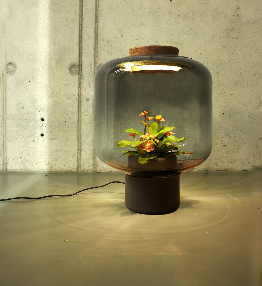 We-designed-these-lamps-to-grow-plants-in-windowless-spaces__880