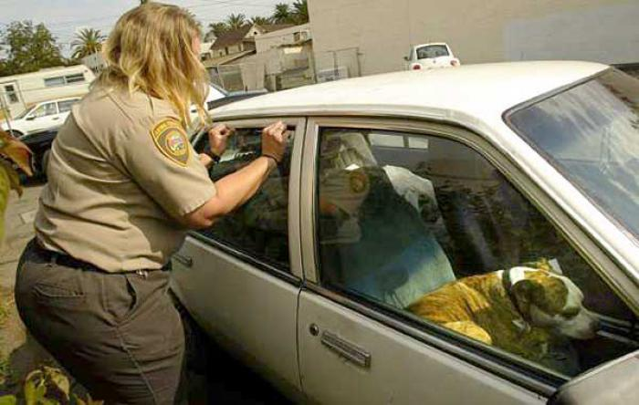 break-car-windows-rescue-dogs-heat-florida-law-1