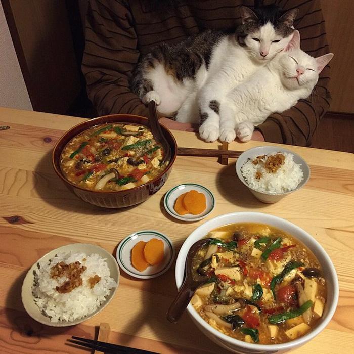 cats-watching-people-eat-naomiuno-22