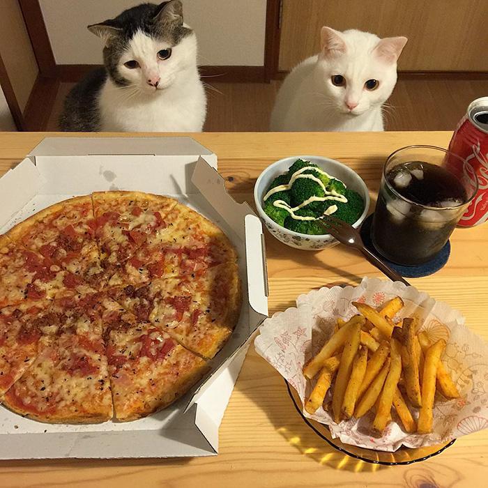 cats-watching-people-eat-naomiuno-24