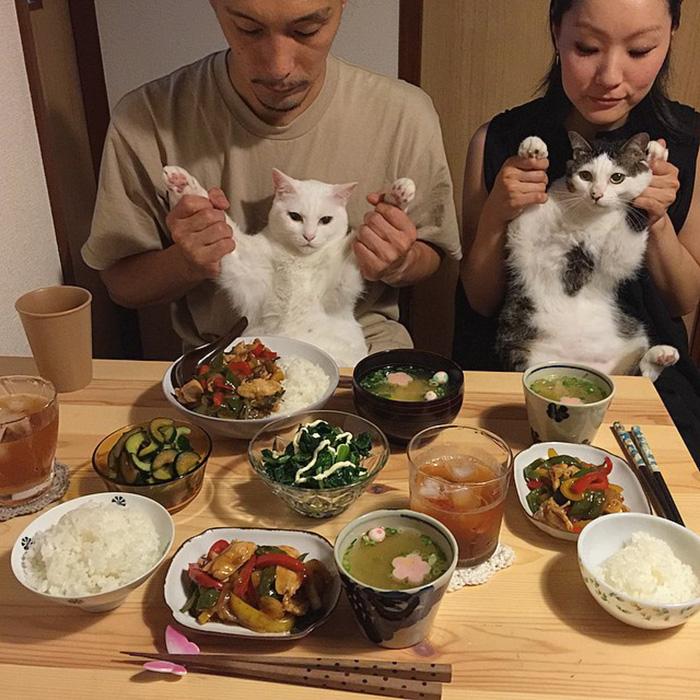 cats-watching-people-eat-naomiuno-28