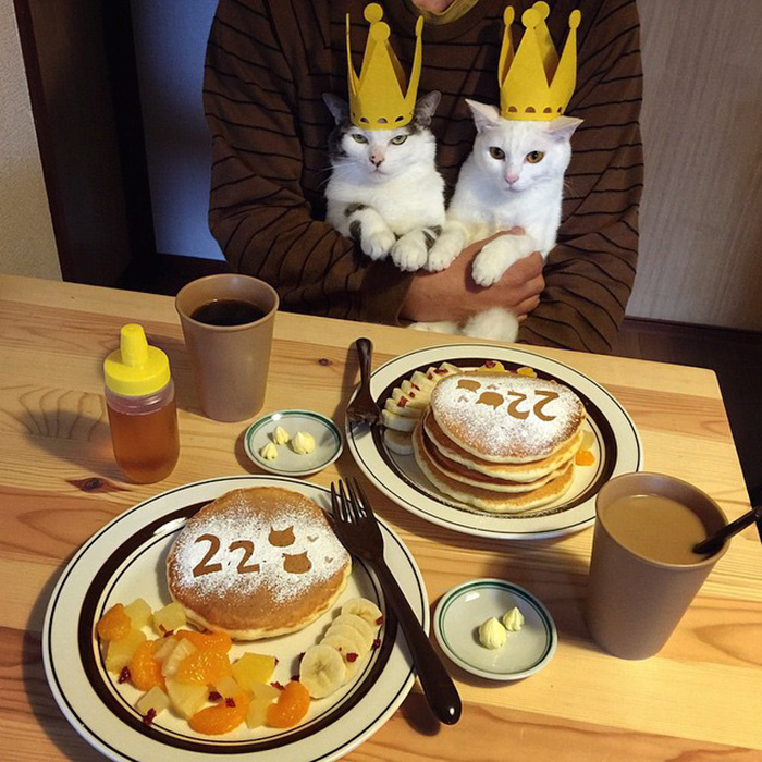 cats-watching-people-eat-naomiuno-29