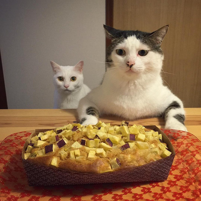 cats-watching-people-eat-naomiuno-6