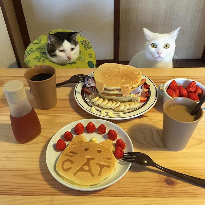 cats-watching-people-eat-naomiuno-8