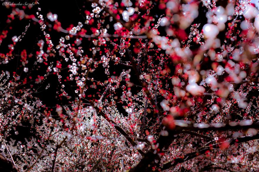 i-captured-spring-in-japan-10__880