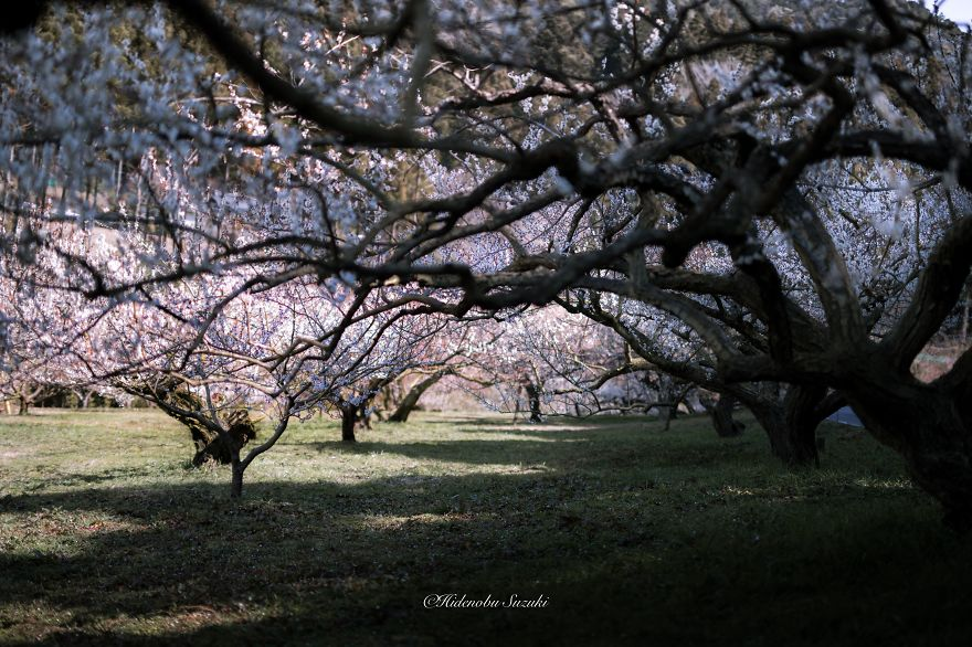 i-captured-spring-in-japan-11__880