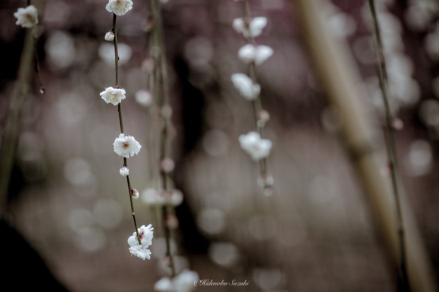 i-captured-spring-in-japan-6__880