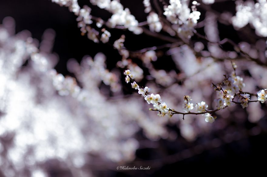 i-captured-spring-in-japan-9__880