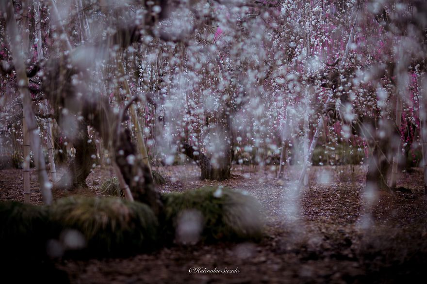i-captured-spring-in-japan__880