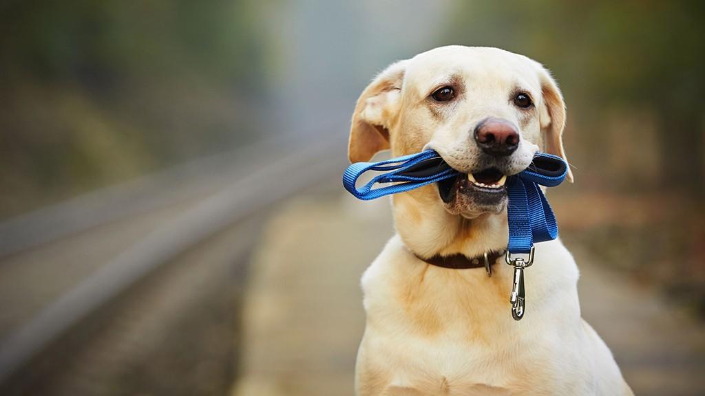 kutya-poraz-1024x576