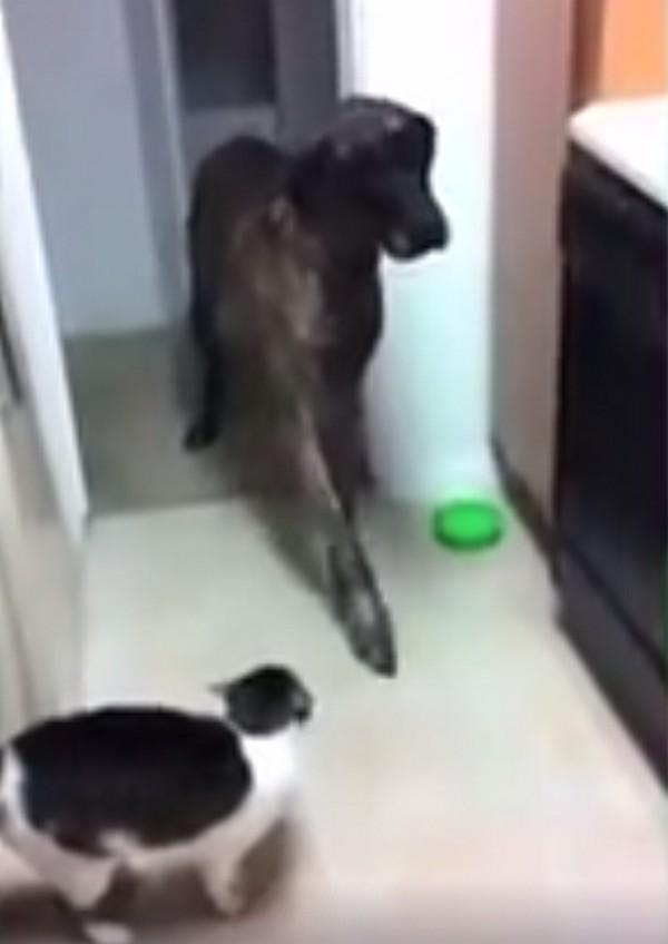 kutyacica1