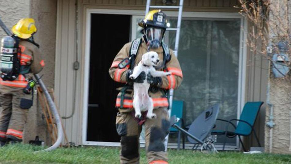 puppu-rescue