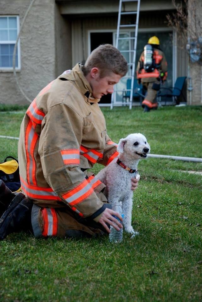 puppy-rescue-2