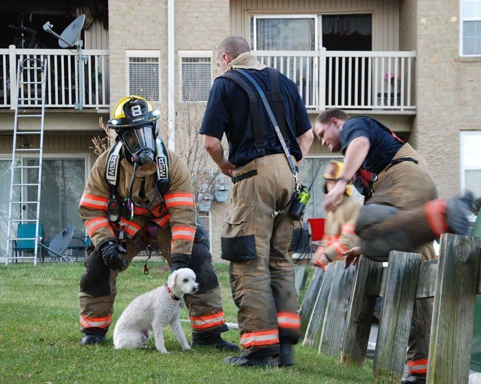 puppy-rescue