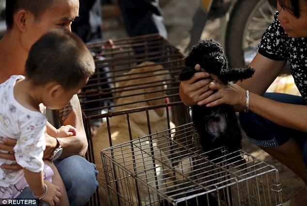 Jó érzésű emberek mennek el a kutyahúsfesztiválra, hogy minél több kutyát fel tudjanak vásárolni
