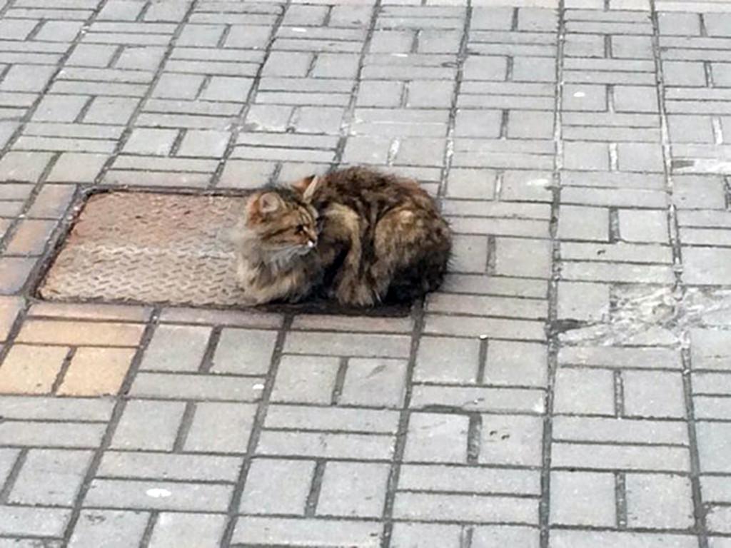 cat-1_2784888a