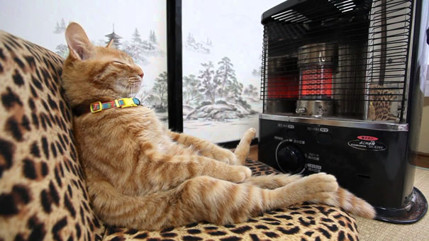 cats-enjoying-warmth-115__605