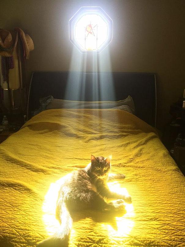 cats-enjoying-warmth-204__605