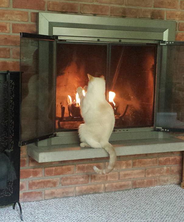 cats-enjoying-warmth-432__605