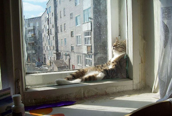 cats-enjoying-warmth-45__605