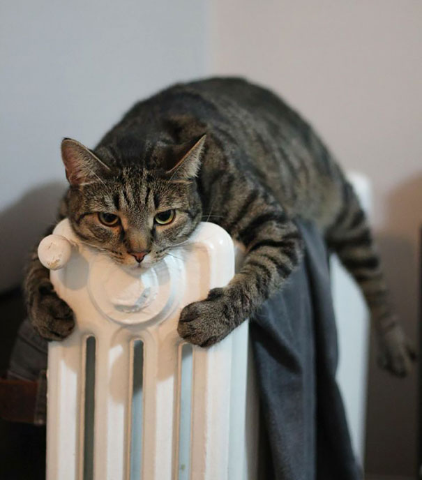 cats-enjoying-warmth-54__605