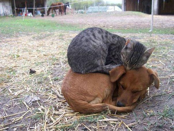 cats-enjoying-warmth-61__605