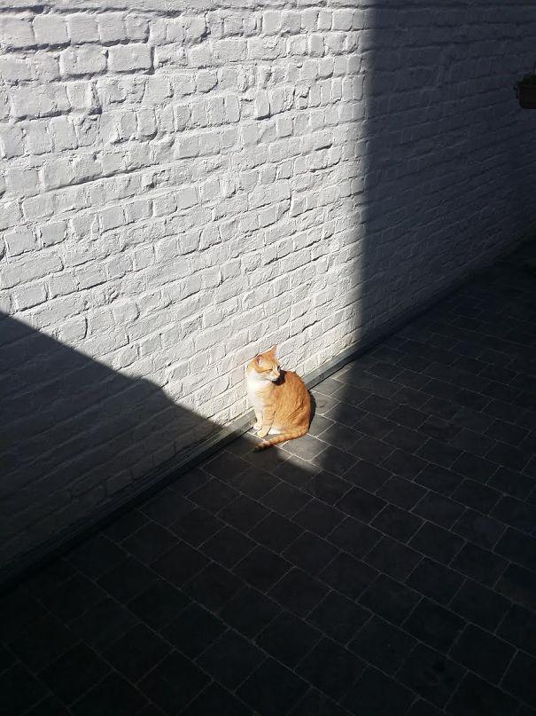 cats-enjoying-warmth__605