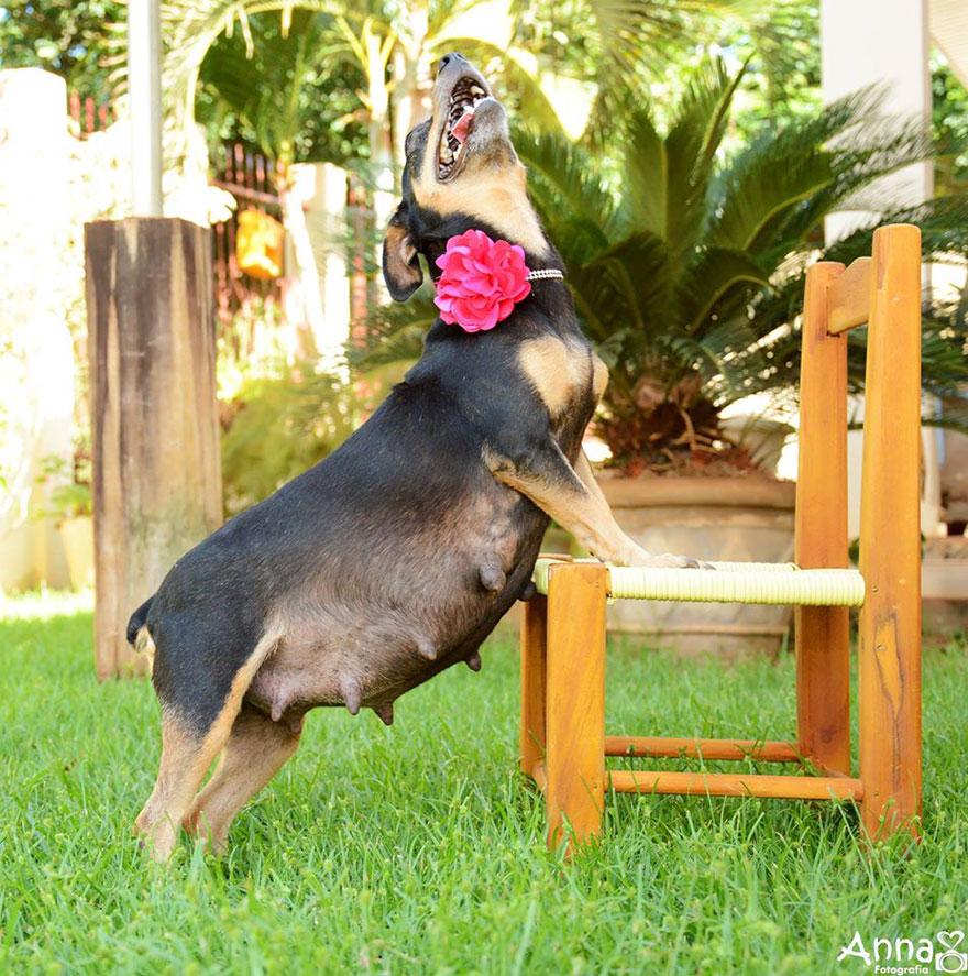 dog-maternity-photoshoot-puppies-lilica-ana-paula-grillo-9