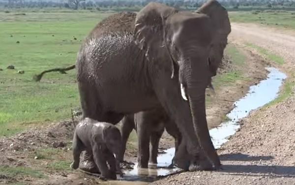elefántpatak1