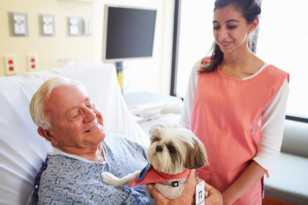 hospital-pets-allowed-animal-therapy-zacharys-paws-for-healing-juravinski-10