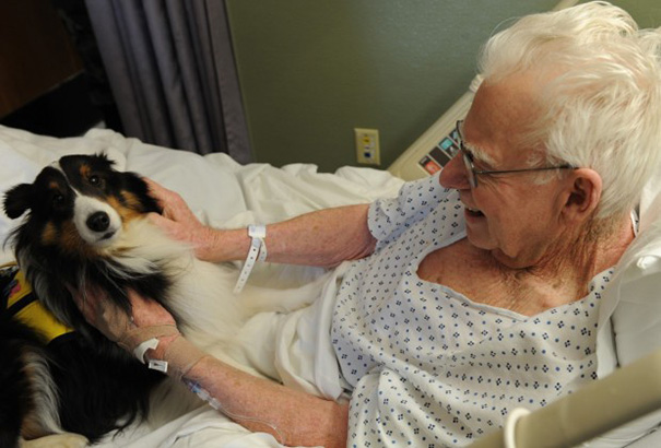 hospital-pets-allowed-animal-therapy-zacharys-paws-for-healing-juravinski-9