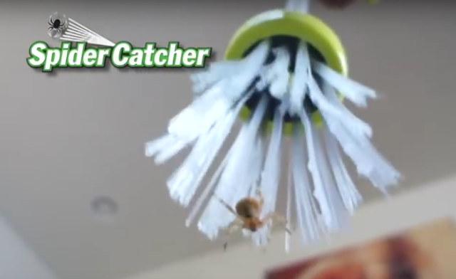 spider-catching-stick