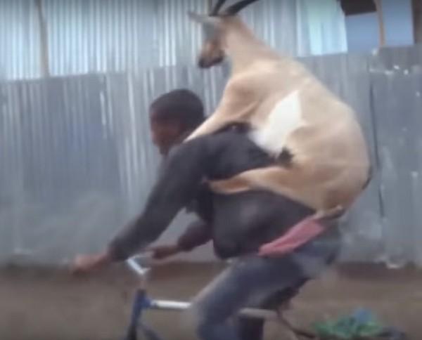 állatszállítás1