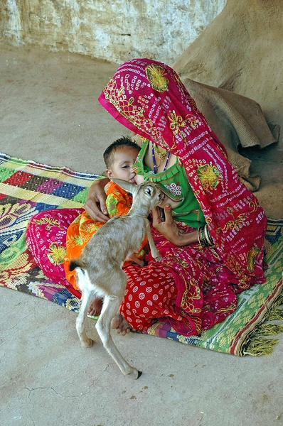 JODHPUR, INDIA - APRIL, 25, 2016: Indian woman from Bishnoi community breastfeeds her baby and fawn simultaneously at her residence in Jodhpur in Rajasthan, India. Bishnois are a religious community of nature worshippers. They strictly forbid the harming of trees and animals. Bishnois are strong lovers of wild animals, especially deer and different breeds of antelopes. Photography by : Dr. Vinod Dave / Cover Asia Press