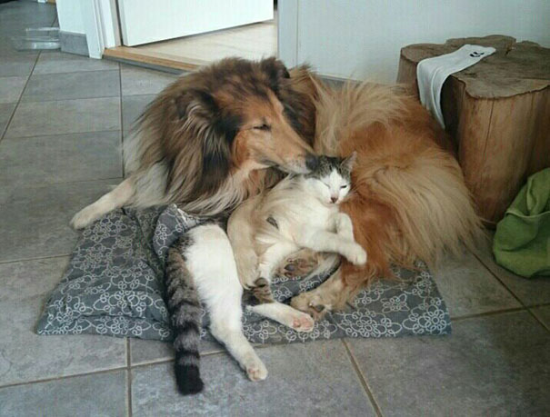 cat-dog-best-friends-molly-moses-3a