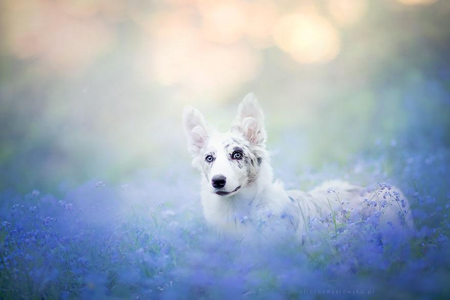 dog-photography-alicja-zmyslowska-2-10-574036df11709__880