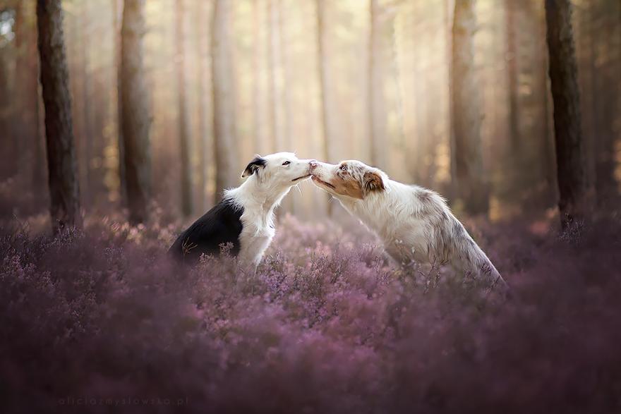 dog-photography-alicja-zmyslowska-2-16