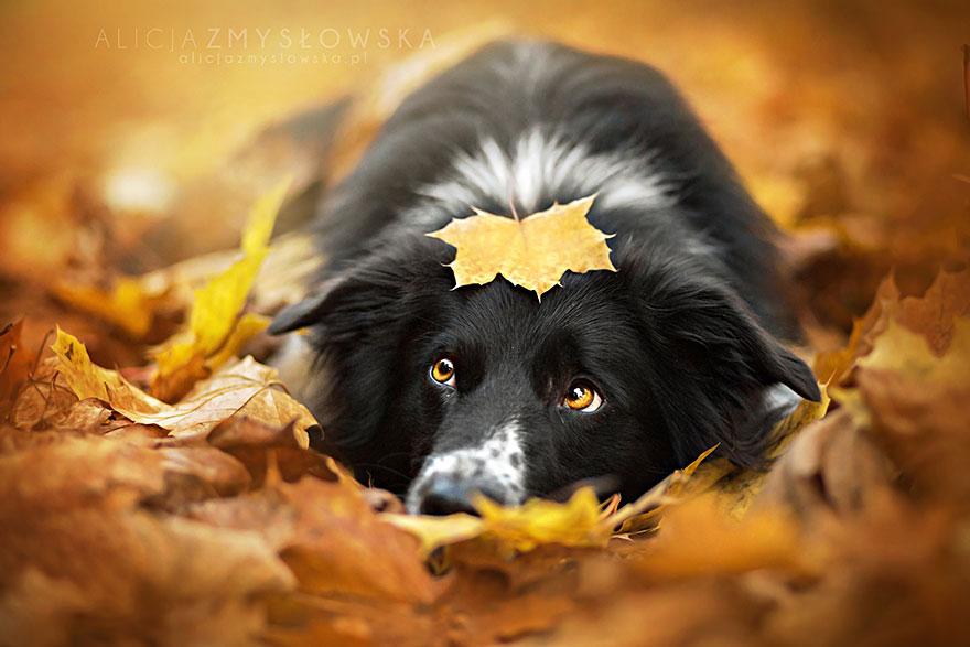 dog-photography-alicja-zmyslowska-2-2-574036cfc7fbf__880