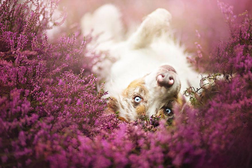 dog-photography-alicja-zmyslowska-2-3-574036d20ed60__880