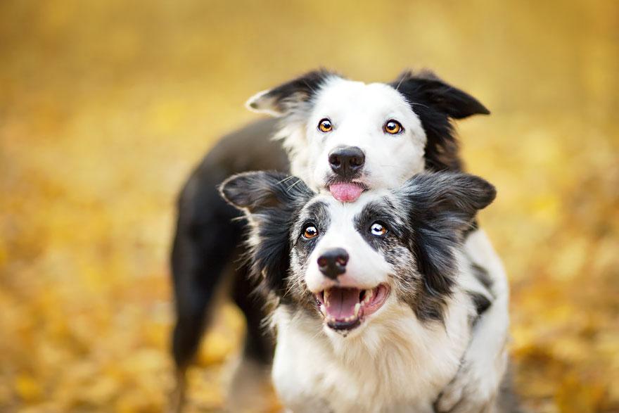 dog-photography-alicja-zmyslowska-2-4-574036d3d008a__880