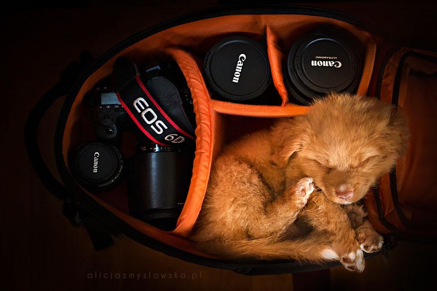 dog-photography-alicja-zmyslowska-2-5-574036d5dd310__880