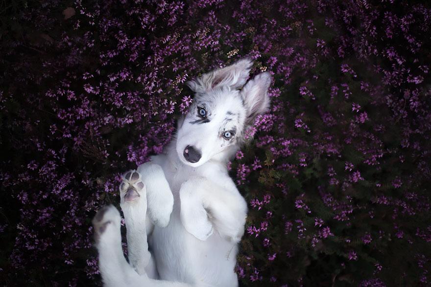 dog-photography-alicja-zmyslowska-2-6-574036d7d133b__880
