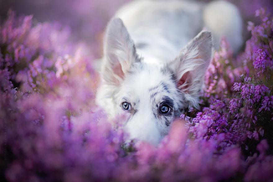 dog-photography-alicja-zmyslowska-2-7-574036d97259a__880