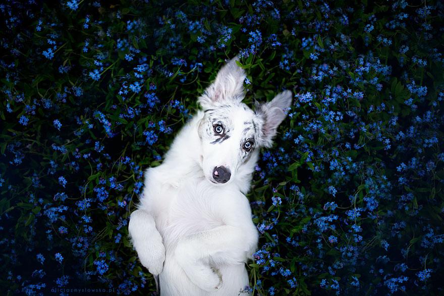 dog-photography-alicja-zmyslowska-2-9-574036dd06b37__880