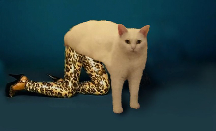 funny-half-cat-photoshop-battle-9-57357f69ca9f6__700