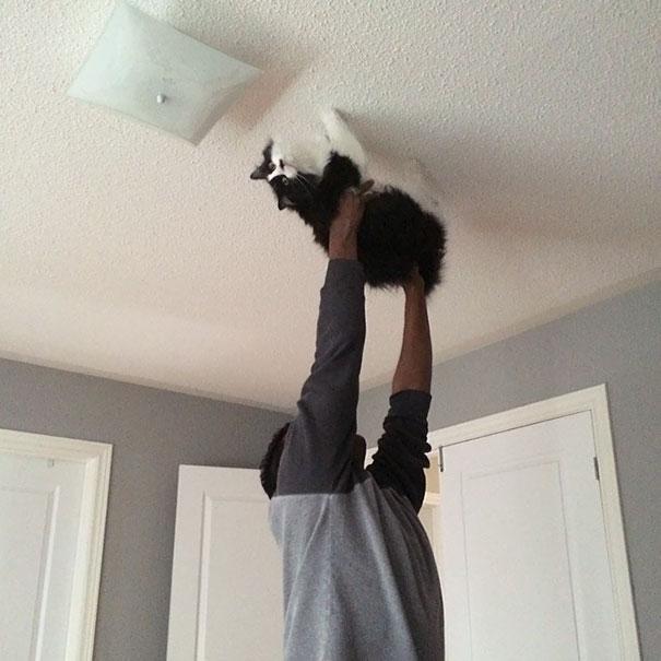 Bementem a szobába, és a férjem a macskát a plafonon sétáltatta.